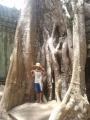 巨大な木の根っこ