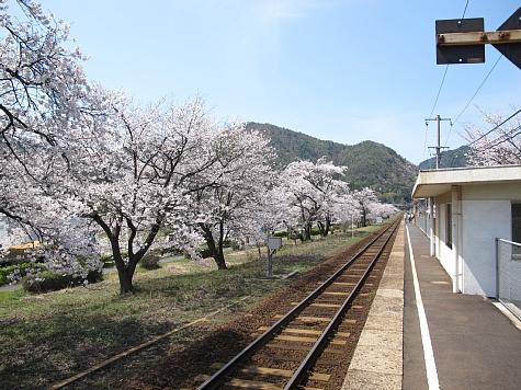 130404 大岩駅の桜並木_008