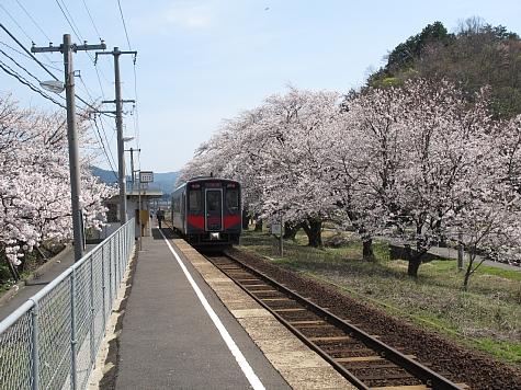 130404 大岩駅の桜並木_011