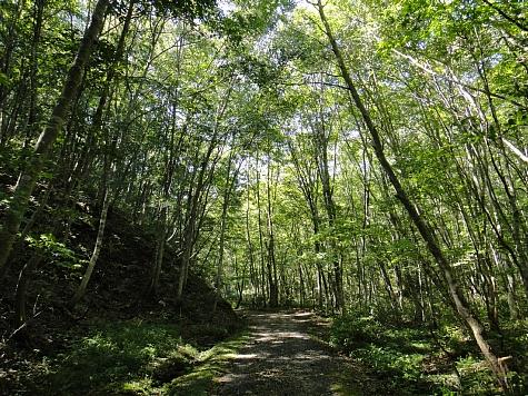 130919岡山県立森林公園028