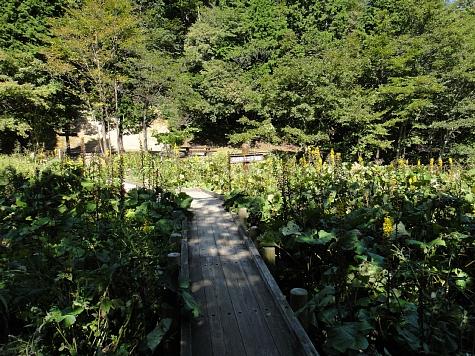 130919岡山県立森林公園022