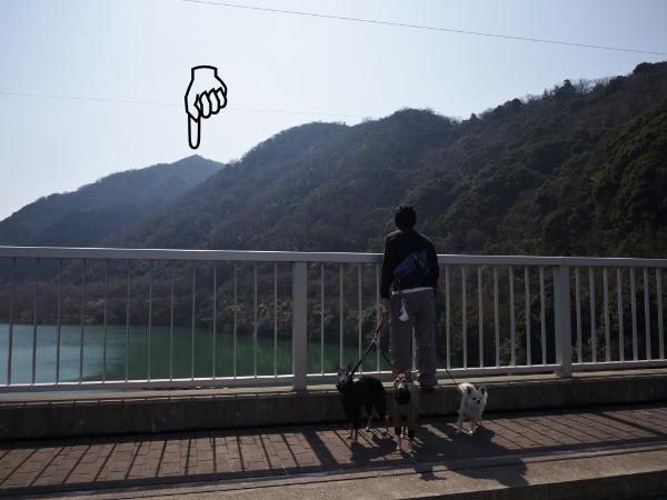 ダムの水は少な目でした