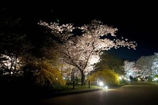 140407shokubutsuen004.jpg