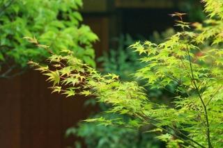 140705tetsugakunomichi057.jpg