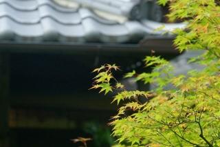 140705tetsugakunomichi058.jpg