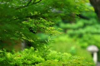 140705tetsugakunomichi059.jpg