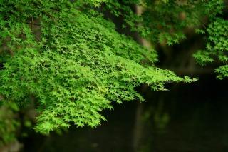 140705tetsugakunomichi060.jpg