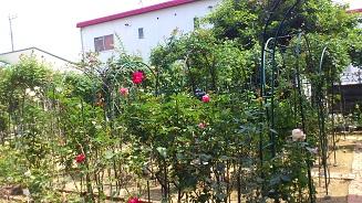 小さな薔薇園 (4)