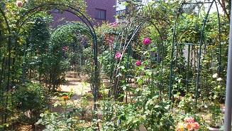 小さな薔薇園 (6)