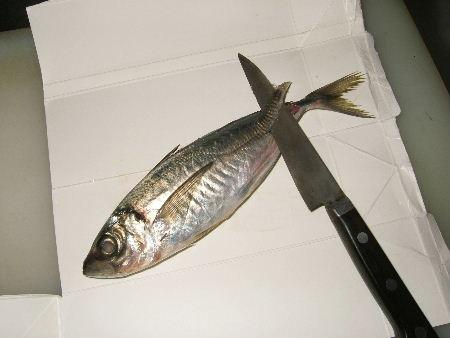 img_1魚2