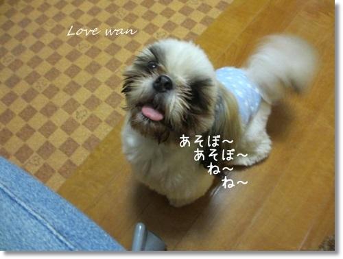 mini2IMG_9371.jpg