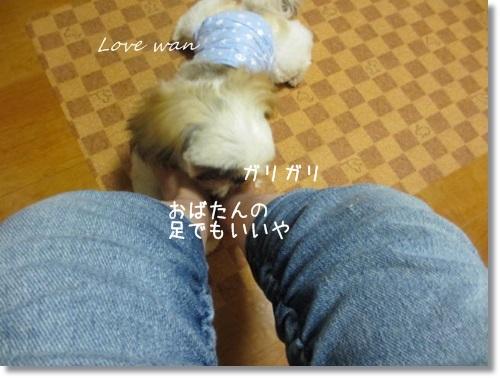mini2IMG_9376.jpg