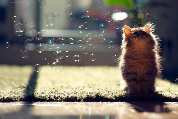 iyashi-cat_00383-600x400.jpg