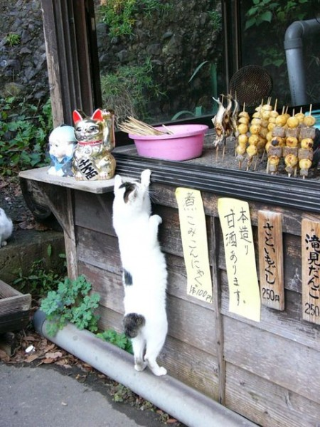 iyashi-cat_00392-450x600.jpg
