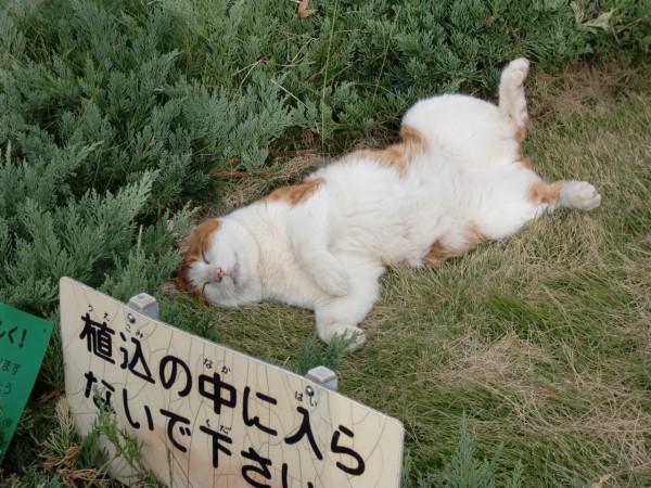 iyashi-cat_00393-600x450.jpg