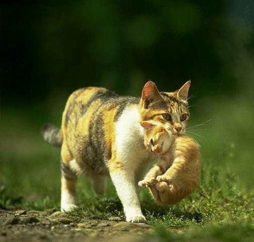 iyashi-cat_01512.jpg