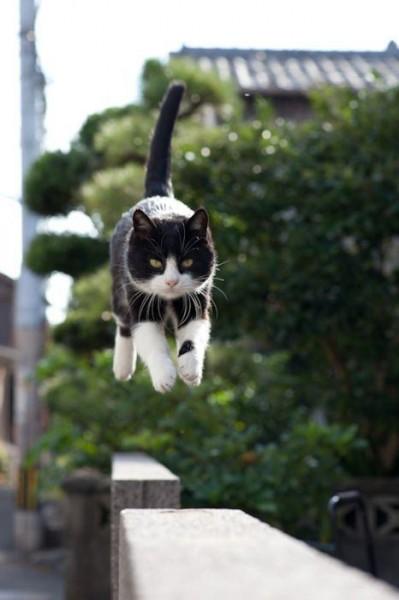 iyashi-cat_01679-399x600.jpg