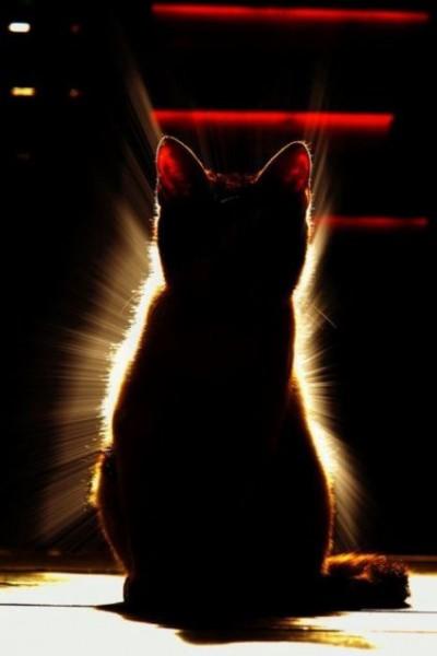 iyashi-cat_01718-400x600.jpg