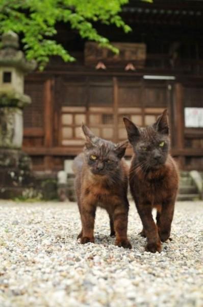 iyashi-cat_01882-398x600.jpg