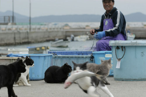 iyashi-cat_01965.jpg