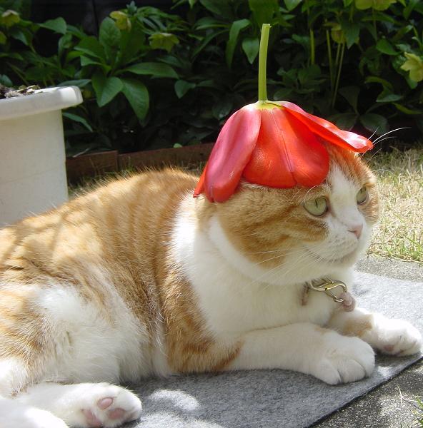 iyashi-cat_01981.jpg