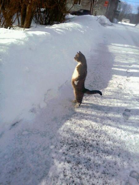 iyashi-cat_02007-450x600.jpg