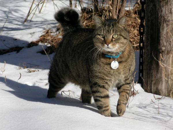 iyashi-cat_02026-600x450.jpg