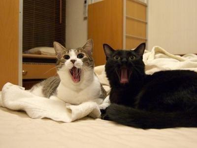 iyashi-cat_02099.jpg