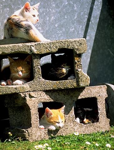 iyashi-cat_02164.jpg