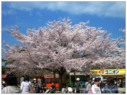 松ヶ岡公園3