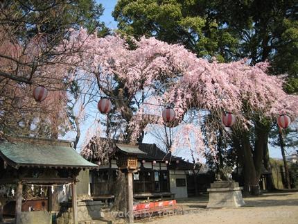三島八幡神社 1