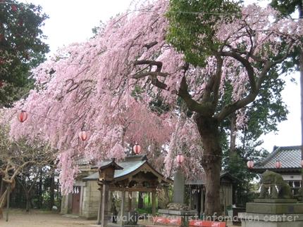三島八幡神社 2