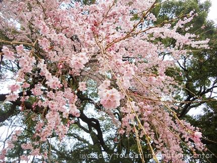 三島八幡神社3