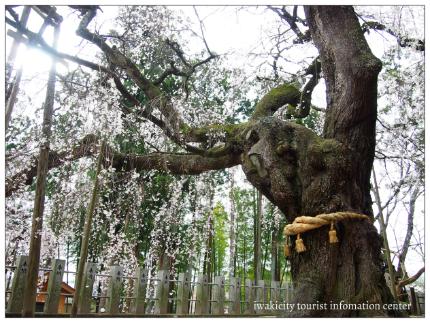 小川諏訪神社5