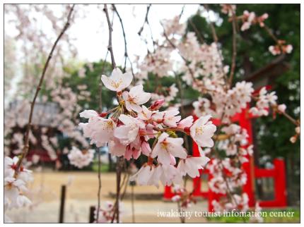 小川諏訪神社6