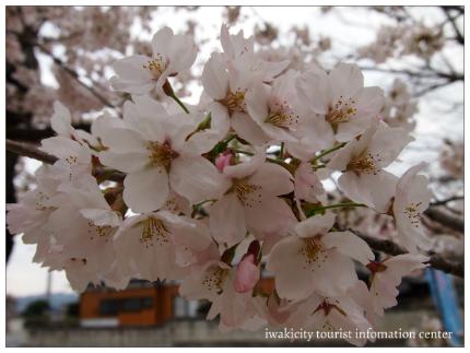 小川諏訪神社8