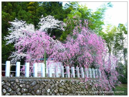 小川諏訪神社9