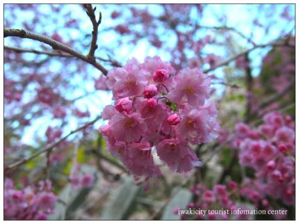 小川諏訪神社10
