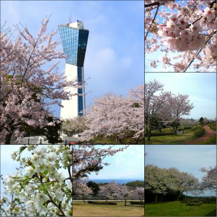 三崎公園1
