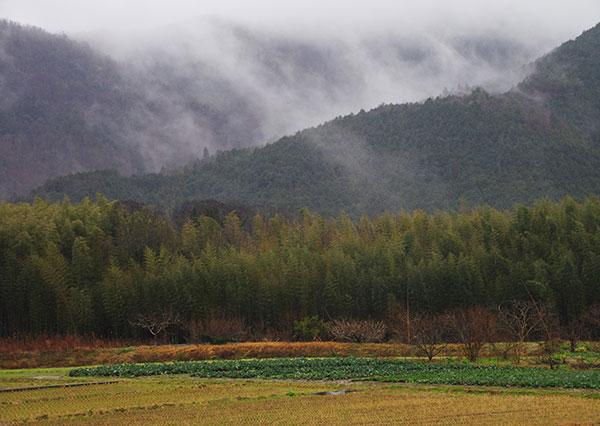 大洲市板野の田園