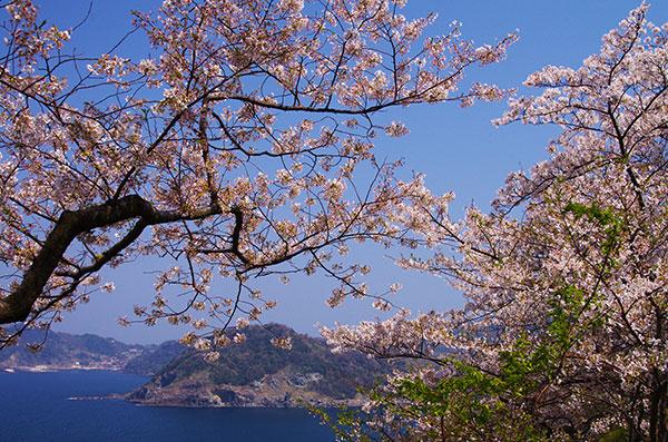 島根半島のチェリーロード