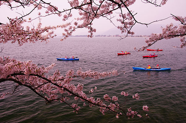 海津大崎の桜とカヤック