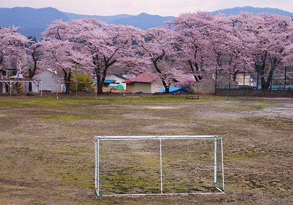 廃校跡の桜