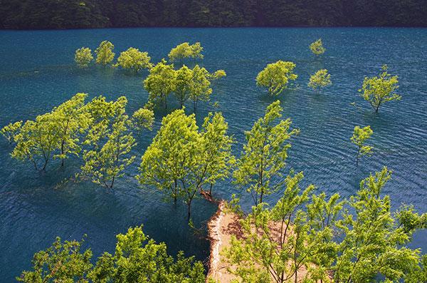 秋扇湖の湖面樹