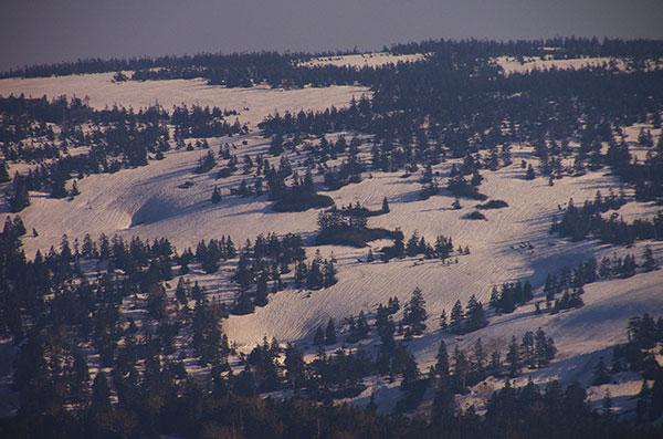 八幡平の樹林帯と残雪
