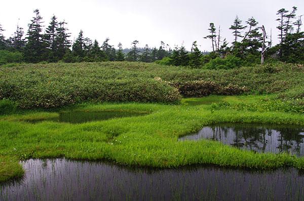 八幡沼の夏