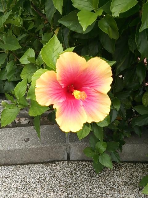DSC_okinawa12.jpg