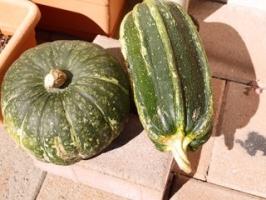 Pumpkin & Kumi-kumi