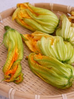 Flowers of courgette