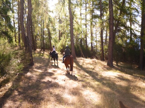 Riding in Rippon forest